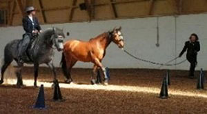 pferde quadrille figuren